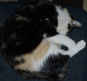 The damn cat pisses me off and hasn't earned it's keep... ever.  All it does is sleep and crap; like a teenager.